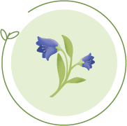 Bluebell Image